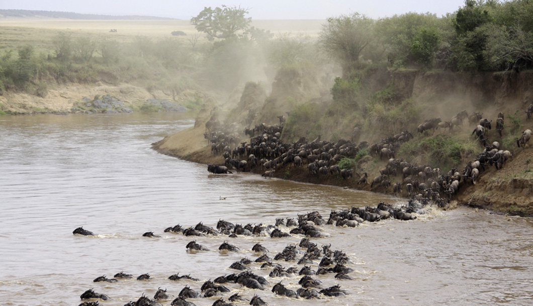 The Great Migration River Crossing