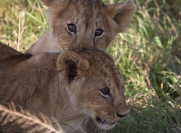 Endangered Species Safari Kenya