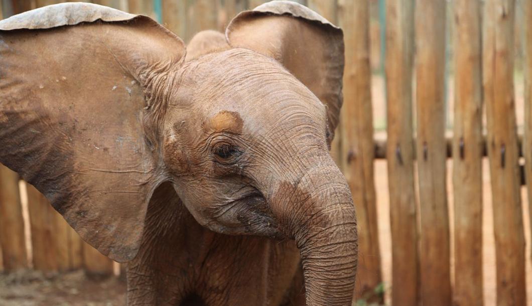A happy little Wanjala