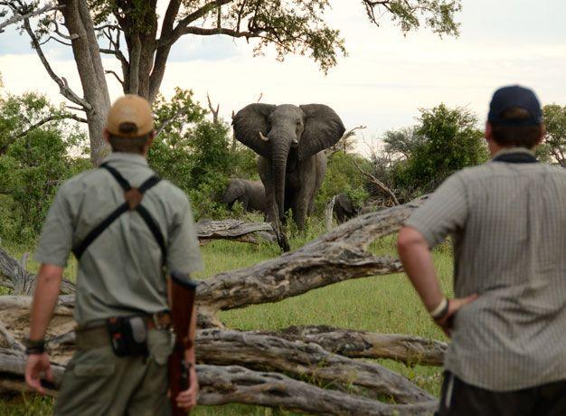 Bush Walking in Africa
