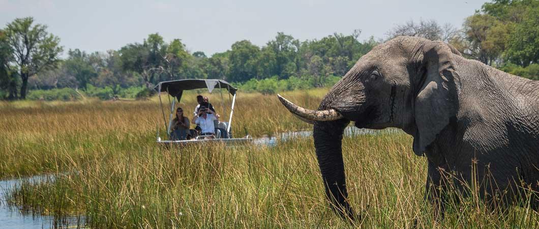 Elephant on safari in the Delta