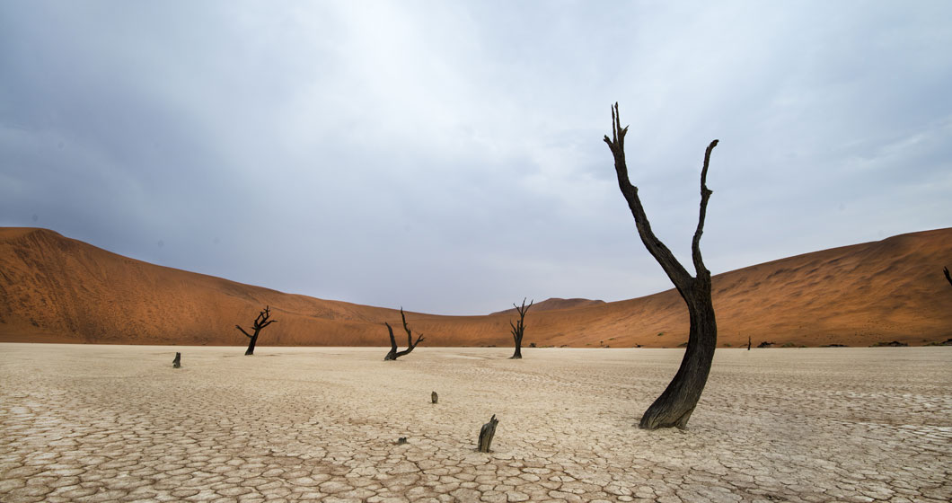 Deadvlei | Sossusvlei, Namibia