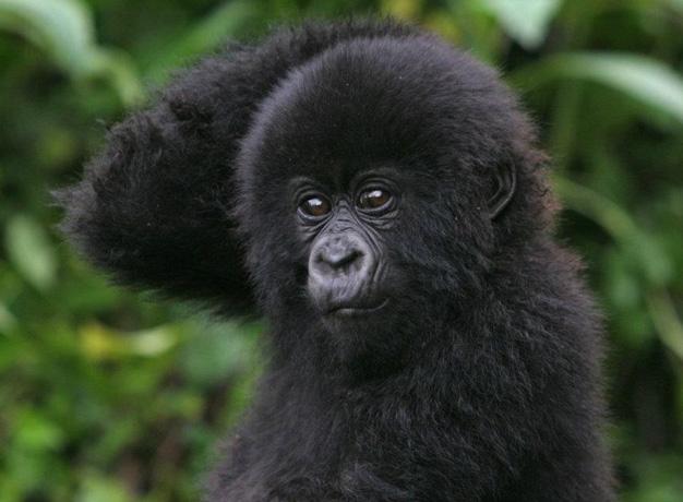 Comparing Uganda and Rwanda Travel
