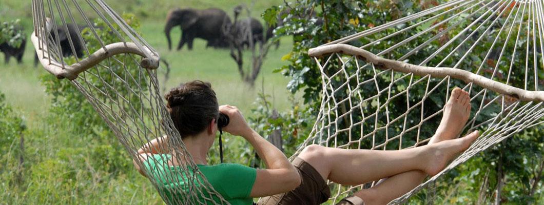 Go Wild in Botswana...
