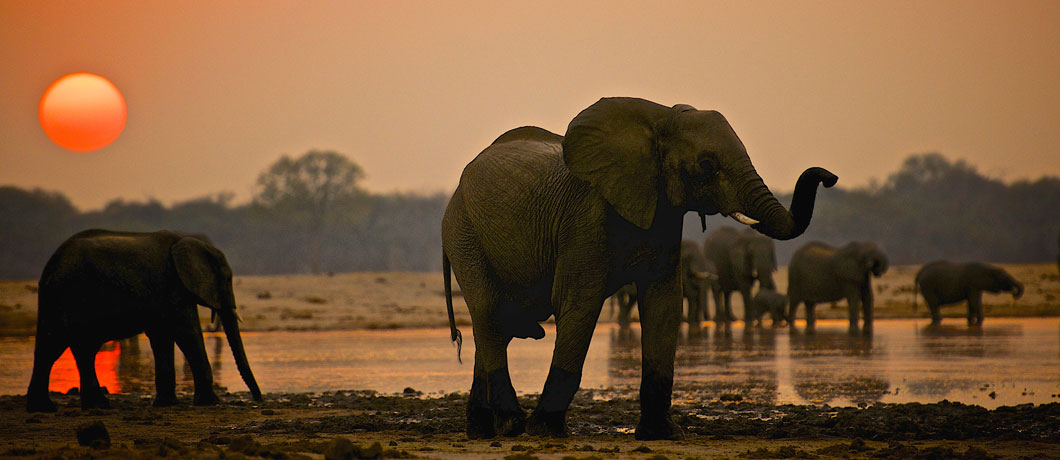 Where to see elephants in the wild