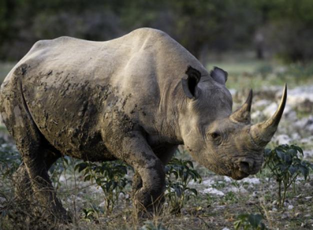 Wildlife Safari Namibia