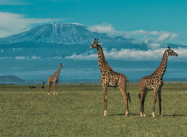 Kenya wildlife safari tours