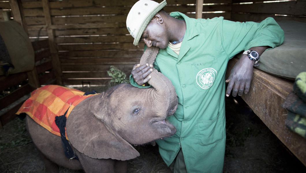 2. Meet the baby elephants and their keepers