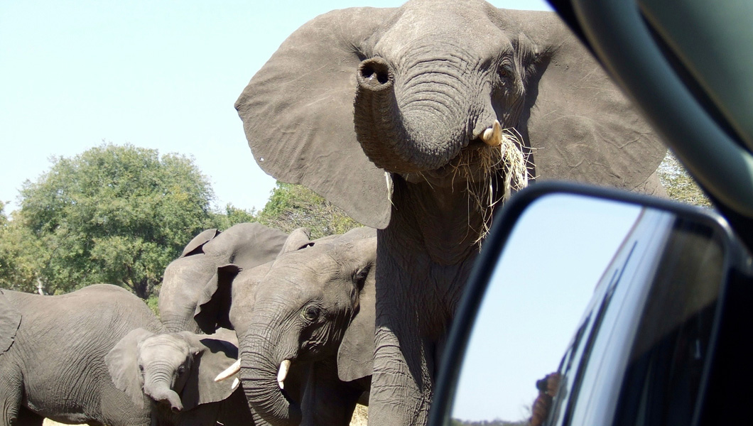Get up Close to the Wildlife in South Africa