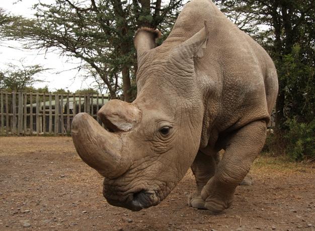 Sudan Conservation Ol Pejeta