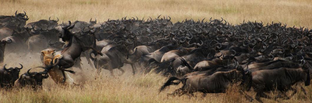 Season Calendar Masai Mara