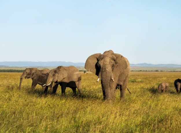 East Africa Safari Tour
