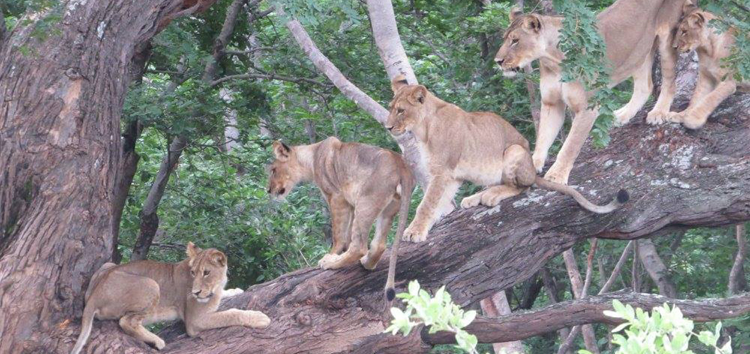 The Spice Girls, with Cecil's Cubs