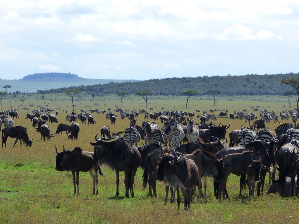 Ndutu Serengeti Safari migration