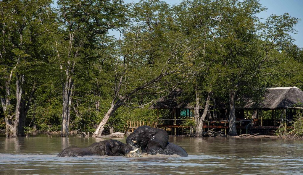 Located next to the only permanent source of water for miles around (a magnet for wildlife – elephant in particular), you don't even need to leave the comfort of your room for top-notch wildlife-watching.