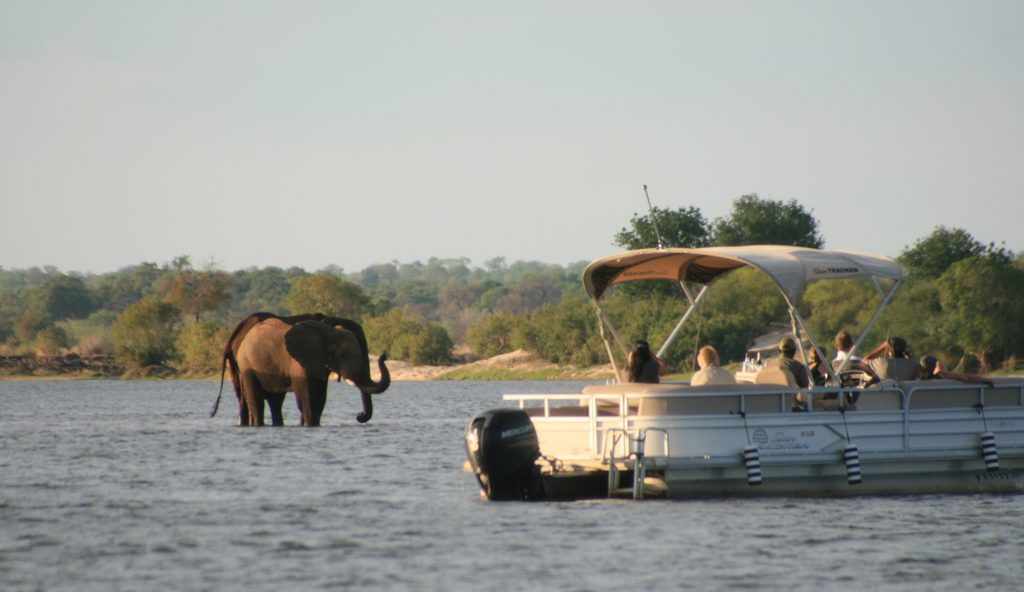 watch the ellies come to drink at the water – a memory you won't forget in a hurry!