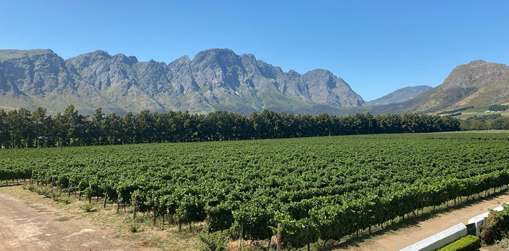 Taking in the mesmerising Cape Winelands scenery on board the Franschhoek Wine Tram. We hopped between a few different wineries, enjoying delicious cuisine, lots of laughs and perhaps a little too much wine