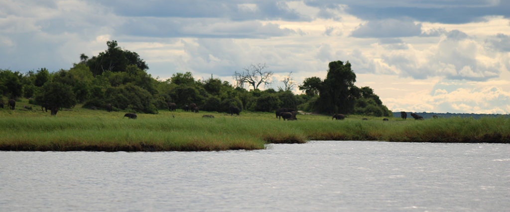 Watching huge herds of elephants play, drink and wallow, from the water. Game viewing by boat whilst enjoying a few drinks at the Chobe National Park was a relaxing way to finish our amazing trip.